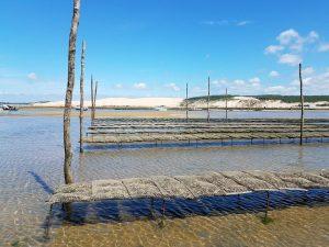 Programme loi pinel à arcachon près de la mer